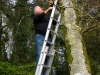 Putting up nest boxes
